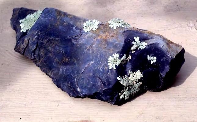 Lichens.jpg